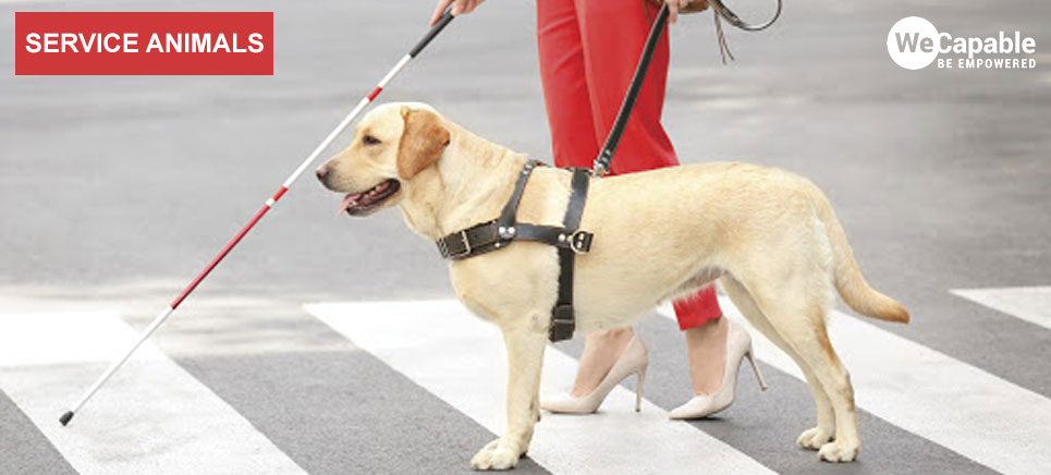 guide dog and other service dogs and animals are very helpful for persons with specific disabilities