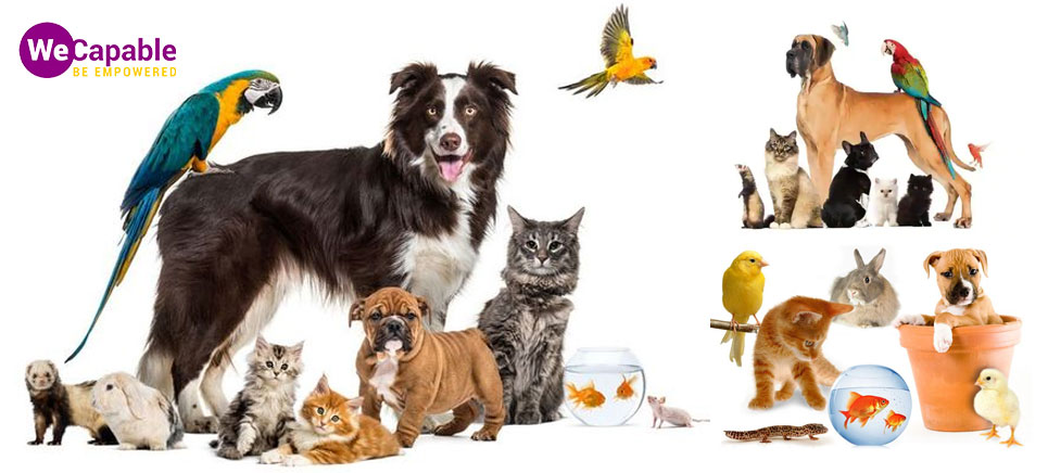 various types of pets